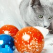 Cat and Christmas balls — Stock Photo #15694109