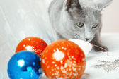 Cat and Christmas balls — Stock Photo