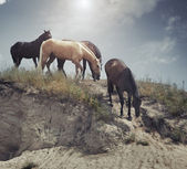Four horses at the slope — Stock Photo