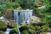 Cascata di montagna nella verde foresta selvaggia — Foto Stock