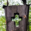 Wooden cross part of the tombstone in a cemetery — Stock Photo #30796103