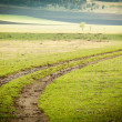 Stock Photo: Dirt road through field