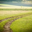 Dirt road through the field — Stock Photo
