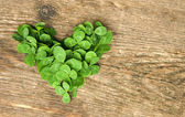 Heart of clover — Stock Photo