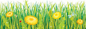 Dandelions in the grass — Stock Vector