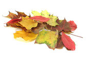 Colorful autumn leaves — Stockfoto