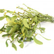 Mistletoe with white berries — Stock Photo