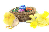 Easter Basket with chick and daffodils — Stock Photo