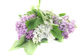 A bouquet of lilac blossoms — Stock Photo