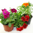 Balcony plants — Stock Photo