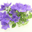 Stock Photo: Bellflower