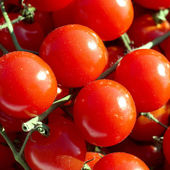 Red tomatoes — Stock fotografie