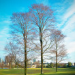 Three trees in autumn park - Stock Photo