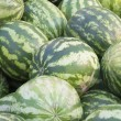 Green watermelons — Stock Photo