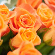 Bunch of beautiful roses — Foto Stock