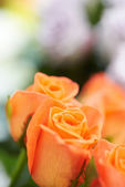 Bunch of beautiful roses — Stock Photo