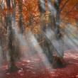 Mist in the autumn forest — Stock Photo