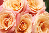Bunch of orange and red beautiful roses. — Stock Photo