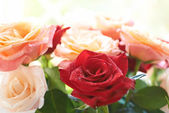 Bouquet of red and white beautiful roses — Stock Photo
