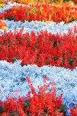 Field of multicolored flowers — Stok fotoğraf