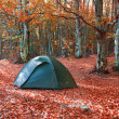 Green tent in the forest — Stock Photo