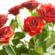 Bunch of red beautiful roses — Stock Photo