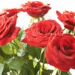 Bunch of red beautiful roses - Stock Photo