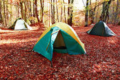 Green tent in the forest — Foto de Stock