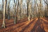 秋天的森林. — 图库照片