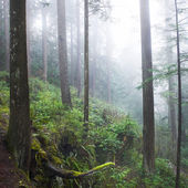 Dark misty forest — Stock Photo