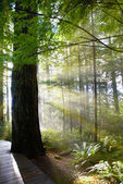 Green forest at sunrise — Stock Photo