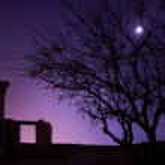 Lonely tree under blue night sky — Stock Photo #26410117