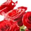 Bunch of red beautiful roses — ストック写真