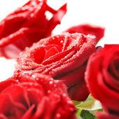 Parta krásných červených růží — Stock fotografie