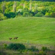 Two horses on green meadow — Stock Photo