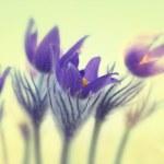 Постер, плакат: Violet flowers