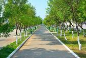 Parque verde — Foto Stock