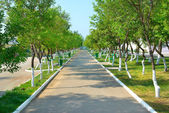 Zelený park — Stock fotografie