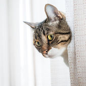Mały szary kot paski — Zdjęcie stockowe