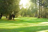 緑豊かな公園 — ストック写真