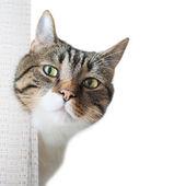 Little gray striped cat — Stock Photo