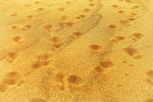 Fotspår i sanden — Stockfoto