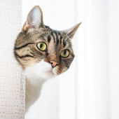 Little gray striped cat — Stock Photo