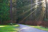 Droga w parku Zielona — Zdjęcie stockowe