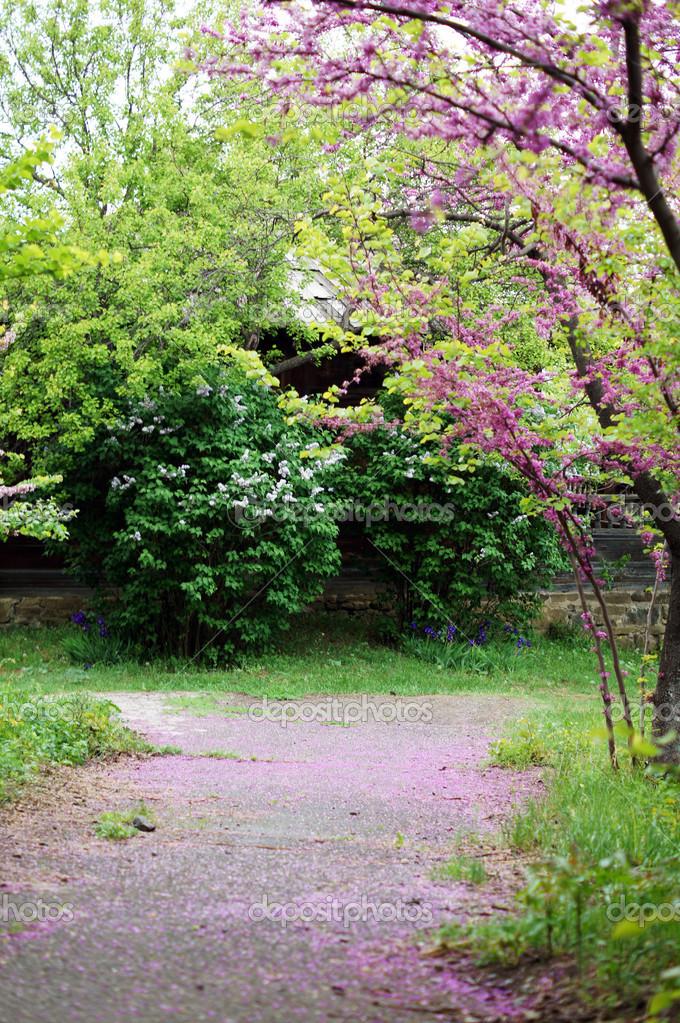 spring time garden road stock photo elet 1 12270982. Black Bedroom Furniture Sets. Home Design Ideas