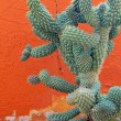 Closeup of cactus plant in wild nature — Stock Photo
