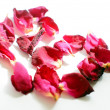 Red hearts and rose petals on the white background — Stock Photo