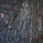 Close up of wood background — Stock Photo #13378803