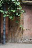 Vieille maison couverte de lierre et plante raisin — Photo