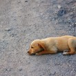 Little homeless dog outdoor - Foto Stock